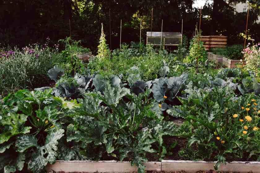 Gefüllte Gemüsebeete