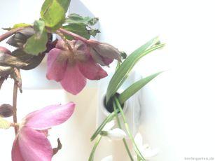 Helleborus und Galanthus