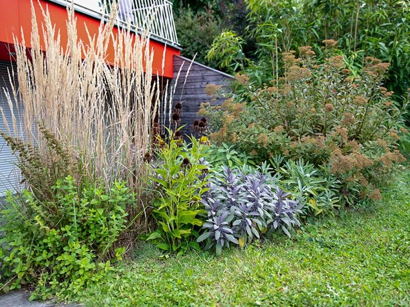 Salbei in Gudruns Garten