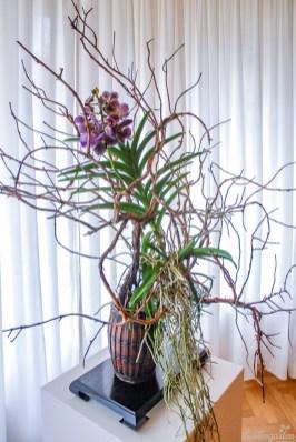 Der Star der Ausstellung: die Vanda-Orchidee von Ulrike Vogler