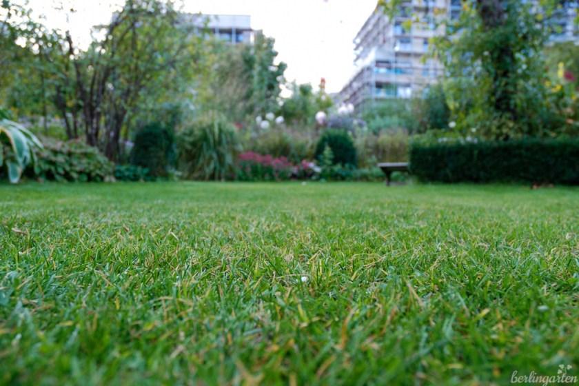 Rasen winterfit