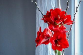 Es öffnen sich immer mehr Blüten