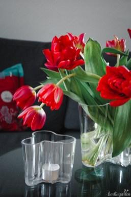 Volle Tulpenblüte