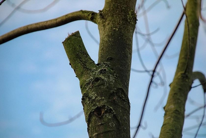 Kleiderhaken sind Stummel beim Baumschnitt