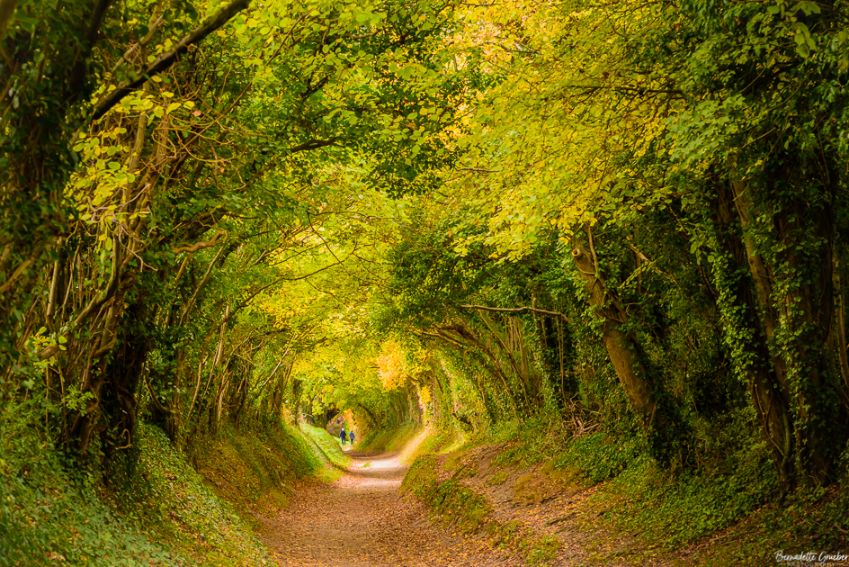 A walk through a magical tree tunnel to Halnaker windmill
