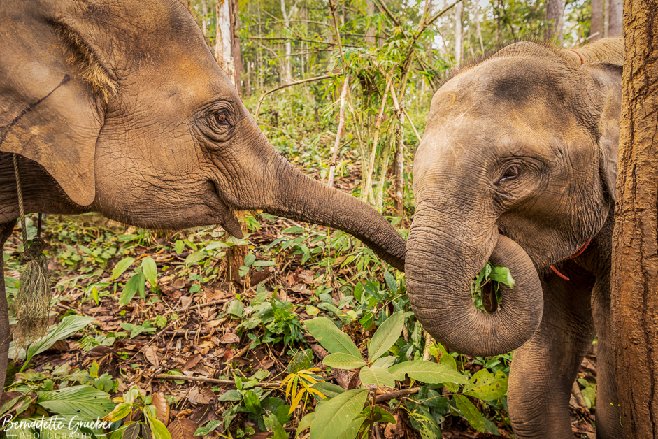Hanging out with elephants in Northern Thailand