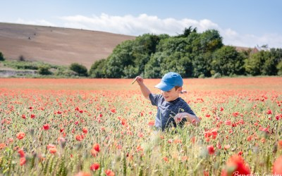 Enjoying the final flourish of poppies near Lancing, West Sussex