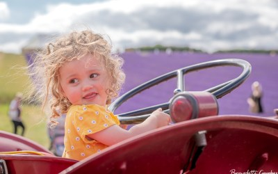 Shenanigans   in   the   lavender   fields   at   Lordington,   West  Sussex