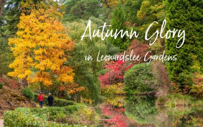 Autumn   Glory  in   Leonardslee  Gardens