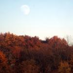 moonrise over oak trees