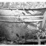 black and white photo of tub with leaves