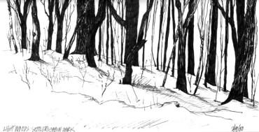 Light Woods