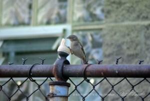 sparrow with ice cream cone