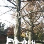 ghosts dance around tree