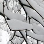 snow on twigs