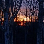 winter sunset with trees