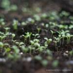 September Salads