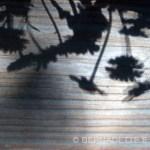 Flower Shadows