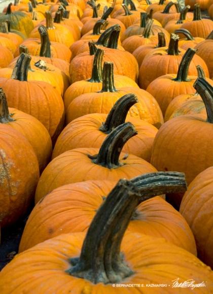 A Long Line of Pumpkins