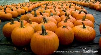 Pumpkins Converge