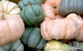 Pastel Pumpkins