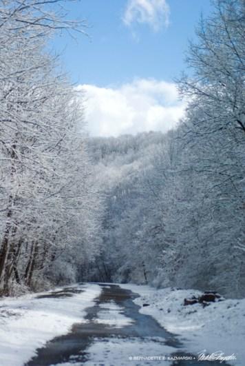 Trail 31