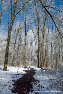 Trail 36