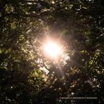 In the Morning Sun