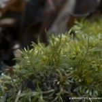 Frosty Mosses