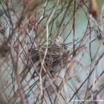 bird nest in brush
