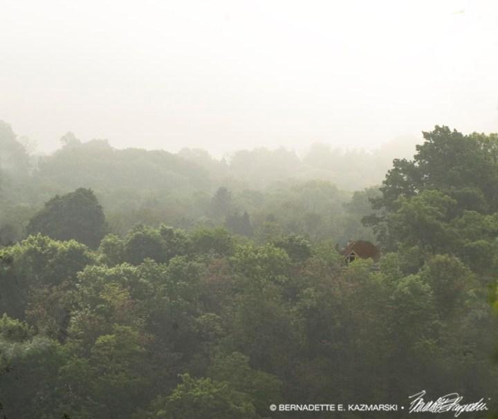 foggy mills