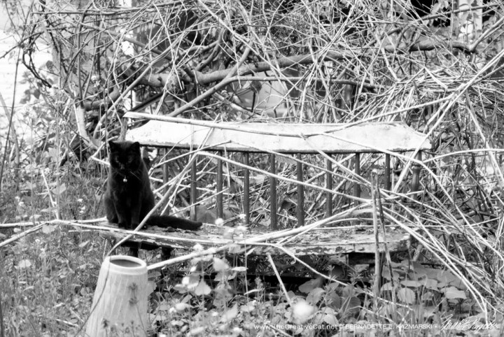 black cat on bench