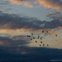 Flying Free at Sunset