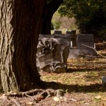 old trees and headstones in cemetery