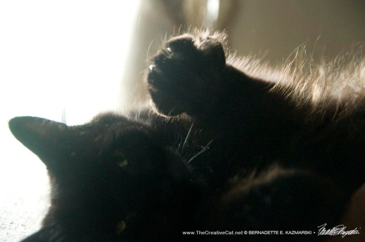 black cat waving