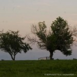 two old apple trees dusk