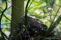 Quand il ne reste plus qu'une proie dans le nid, on se resserre!