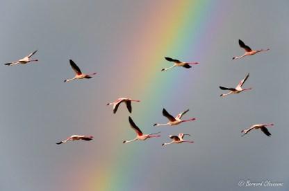 Une chance que cet orage qui est monté rapidement sur le lac Bogoria me permettant cette image parmi tant d'autres....