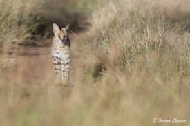 Le chemin du Serval...