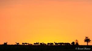 Ombres de gazelles...