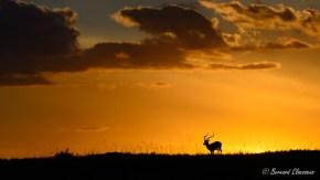 Lever de soleil sur Impala