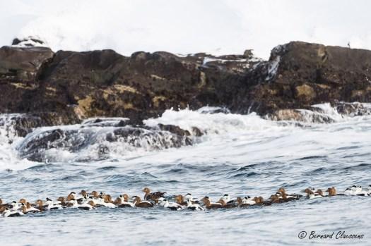 Petite partie d'un grand groupe en mer vers l'île d'Hornoya. Vous remarquerez la forte houle qui nous a empêché de débarquer...