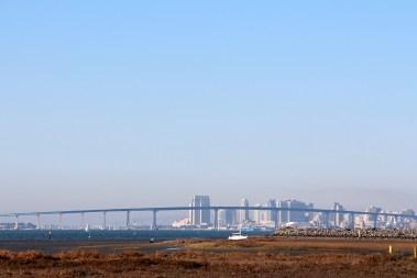 San Diego Skyline - Living Coast Discovery Center