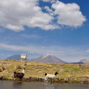 Sajama, Bolivie