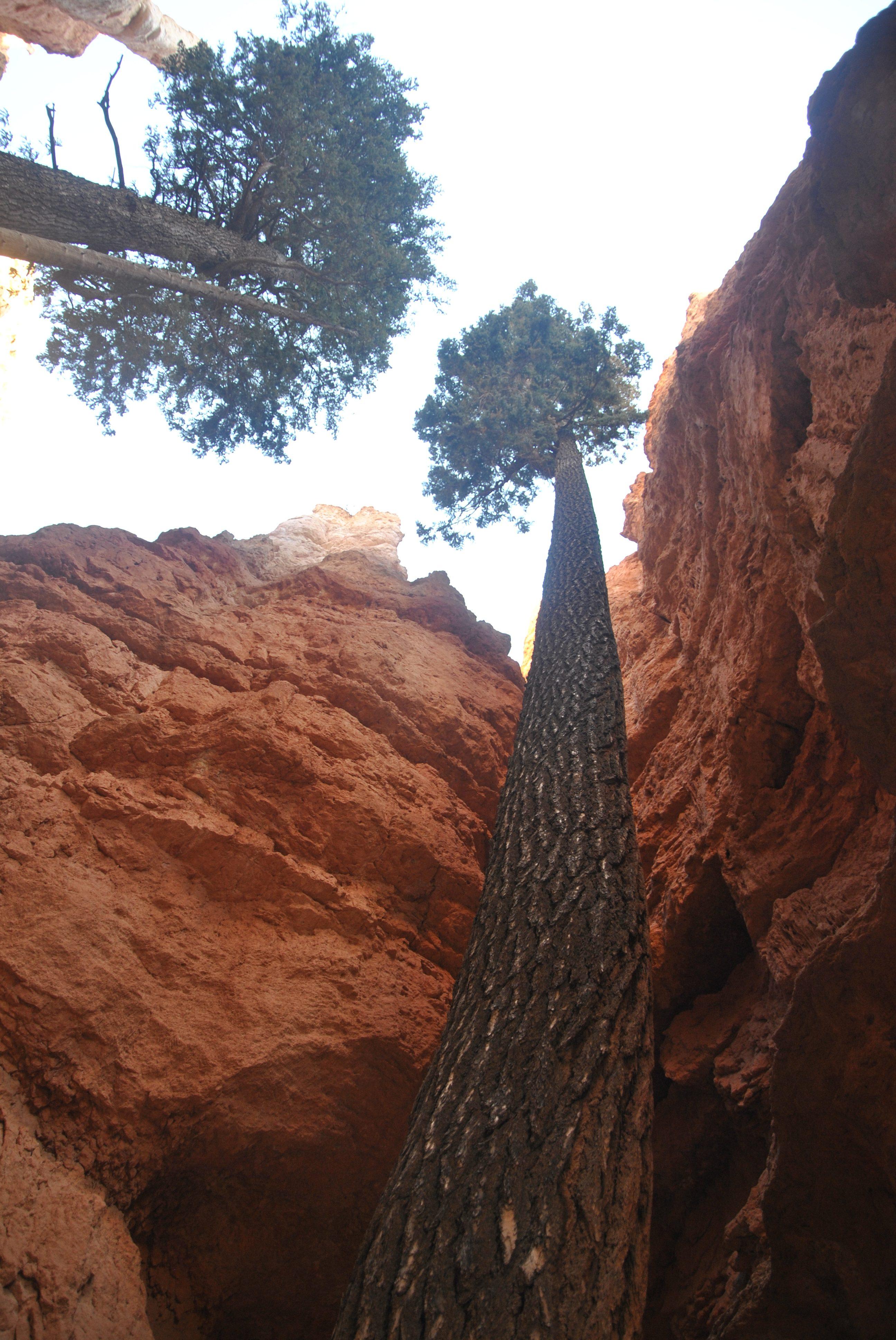 Navajo Loop, Bryce Canyon NP, Utah, USA