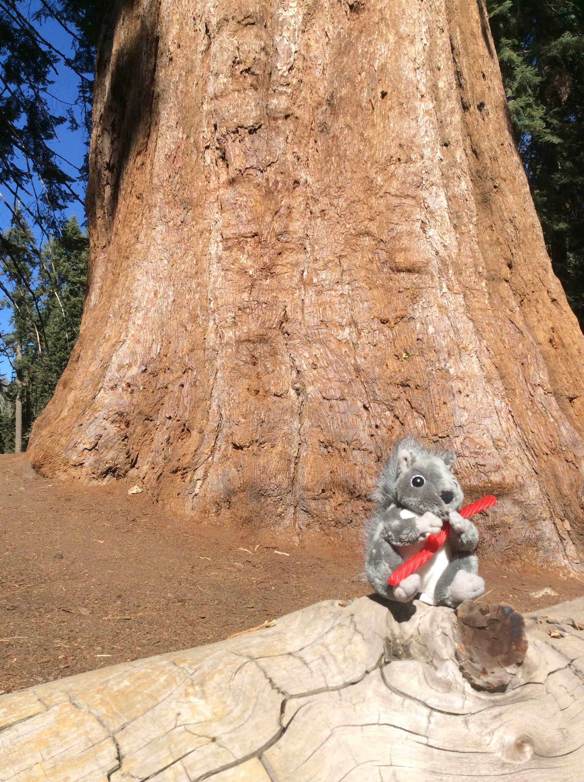 Our new Mascot Spirou, Sequoia NP, Californie, USA