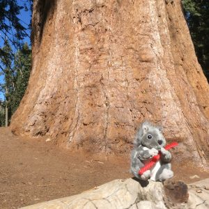 Our new Mascot Spirou, Sequoia NP, Californie, USA