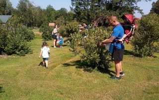 A family picking blueberries