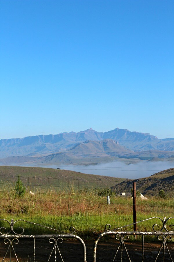 The Underberg Fields of Gold. My stay in the foothills of the great Drakensberg Mountains, South Africa | berrysweetlife.com