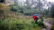 Une belle journée qui commence : cueillette de myrtilles :)